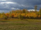 russland-sibirien-birken-und-wolken