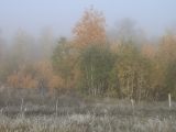 russland-sibirien-herbstmorgen6