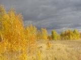 russland-sibirien-leuchtende-birken