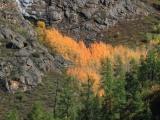 russland-sibirien-altai-herbstfeuer