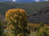 russland-sibirien-altai-indian-summer