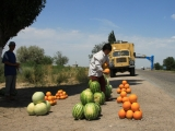 kasachstan-e40-melonen-strassenrand