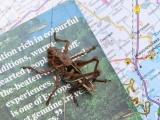 grashuepfer-landkarte