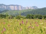 Blumenwiese vor Felsen