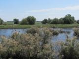 18. Juni Wolgadelta Wasserlandschaft