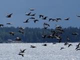 kvarken-vogelflug