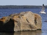 moeve-oesteroe